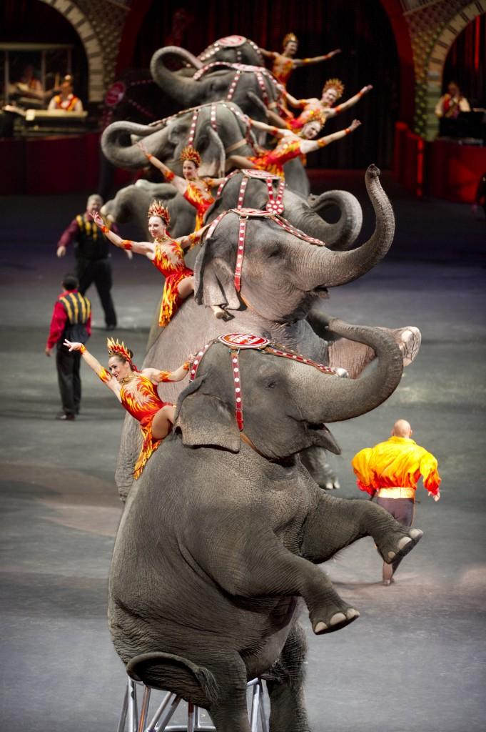 Built to Amaze elephants and acrobats